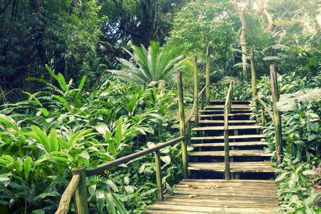 フィジー スリーピング・ジャイアント植物園