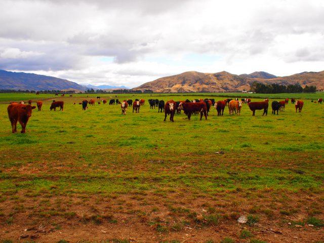 ニュージーランドは酪農王国