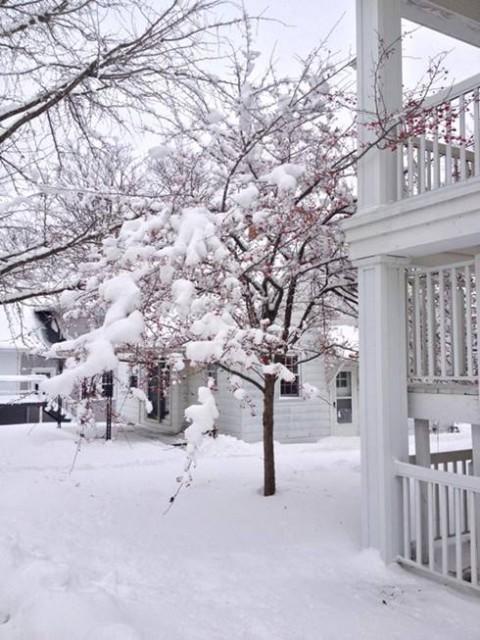 アメリカで降った雪