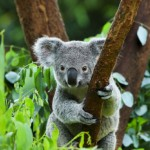 パースに留学しよう!オーストラリアはシドニーだけじゃない。