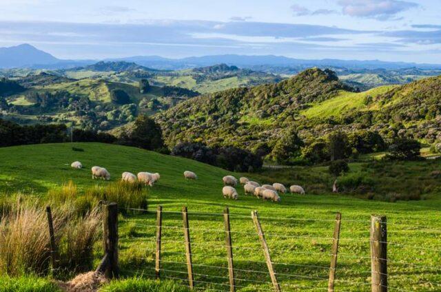 ニュージーランドでワーキングホリデー
