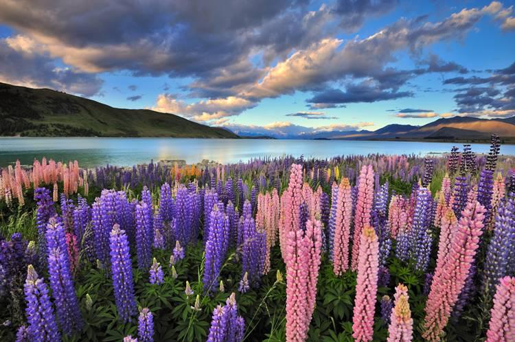 ニュージーランドでワーキングホリデー!住居探し・職探し