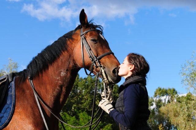 ニュージーランドの魅力 乗馬