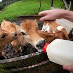 酪農王国「ニュージーランド」を一番感じられるのは「ファームステイ」!