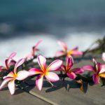 憧れのリゾート地、ハワイで短期語学留学しちゃう?