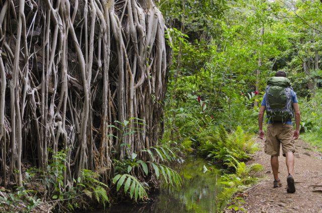 アメリカ ハワイ オアフ島 マノア渓谷