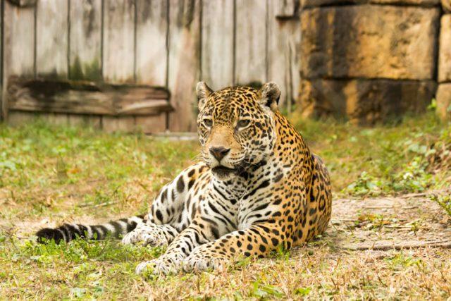 アメリカのマイアミ動物園