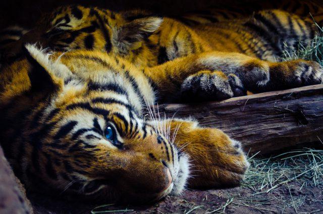 アメリカ サンディエゴ動物園