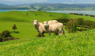 ニュージーランドでサマースクール