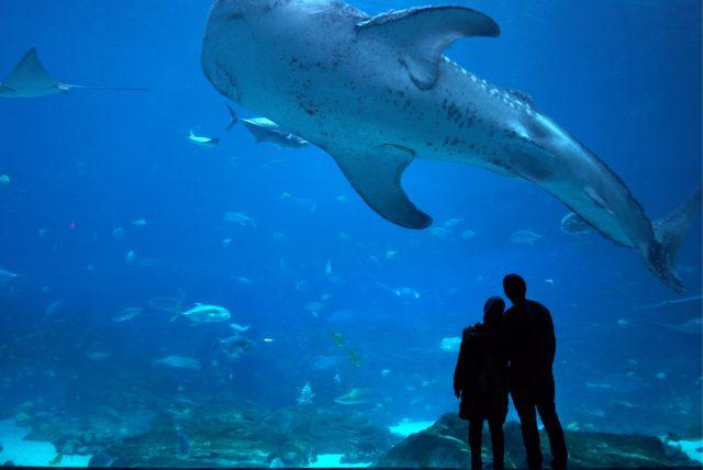 アメリカ アトランタ ジョージア水族館