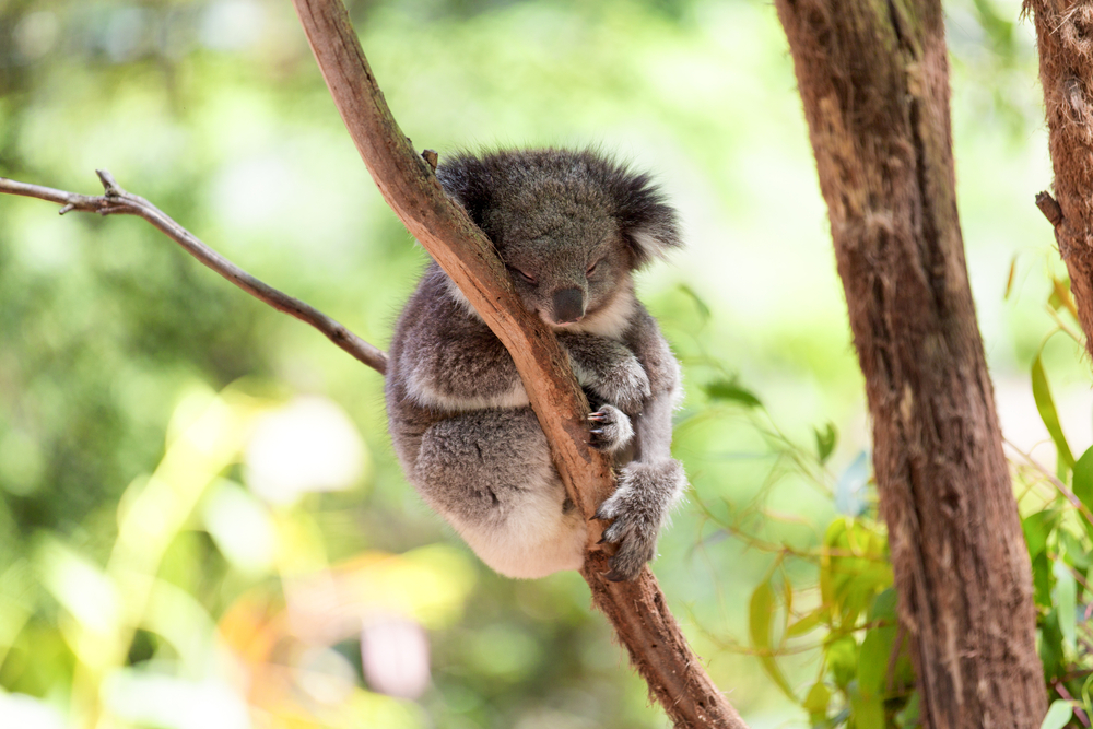 オーストラリアでシニア留学
