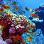 グレート・バリア・リーフで魚達と遊泳!オーストラリアでダイビング留学してみよう