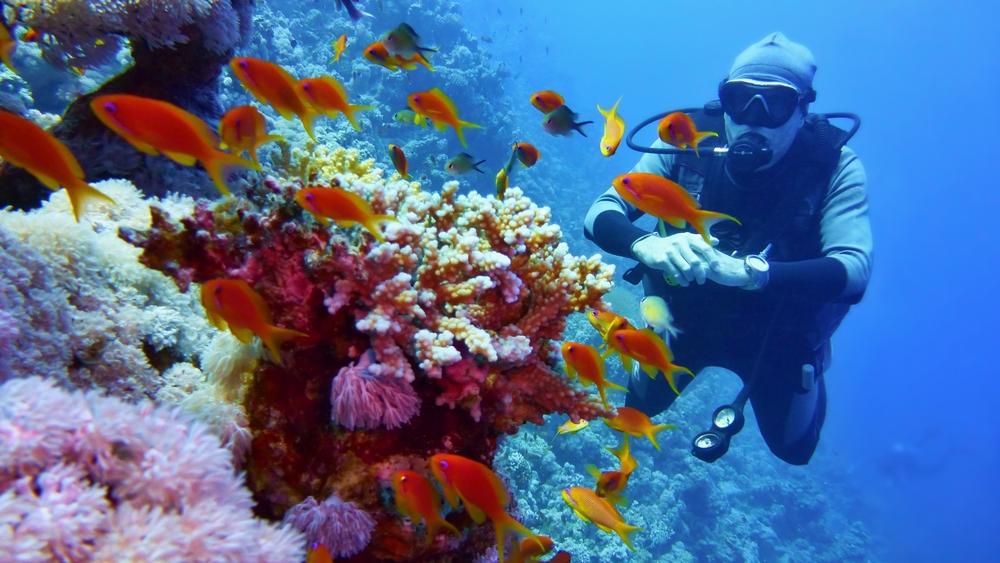 オーストラリアでダイビング留学