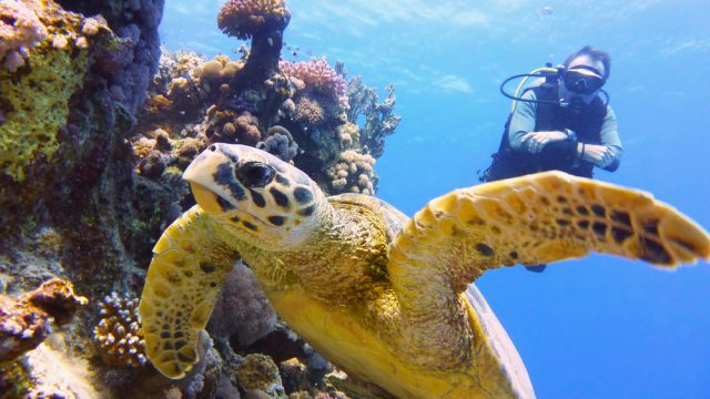 オーストラリアでダイビングができるスクール