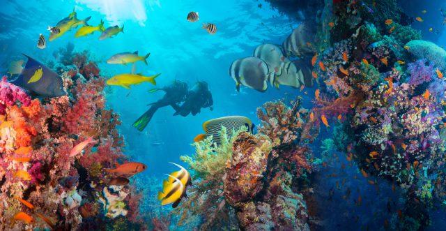 ハワイでスキューバダイビング留学