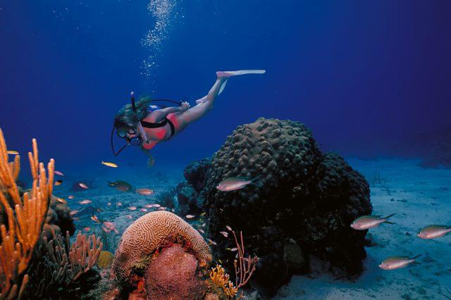 ハワイのダイビング留学費用