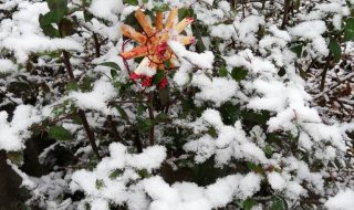 ドイツの冬