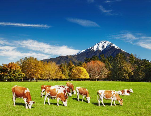 ニュージーランド語学留学で医療英語を学べる都市