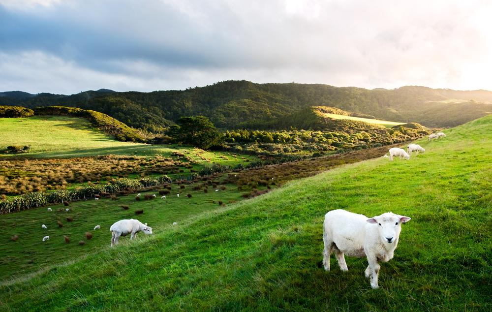 ニュージーランドで2週間の短期語学留学