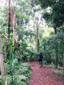 シドニーの王立植物園