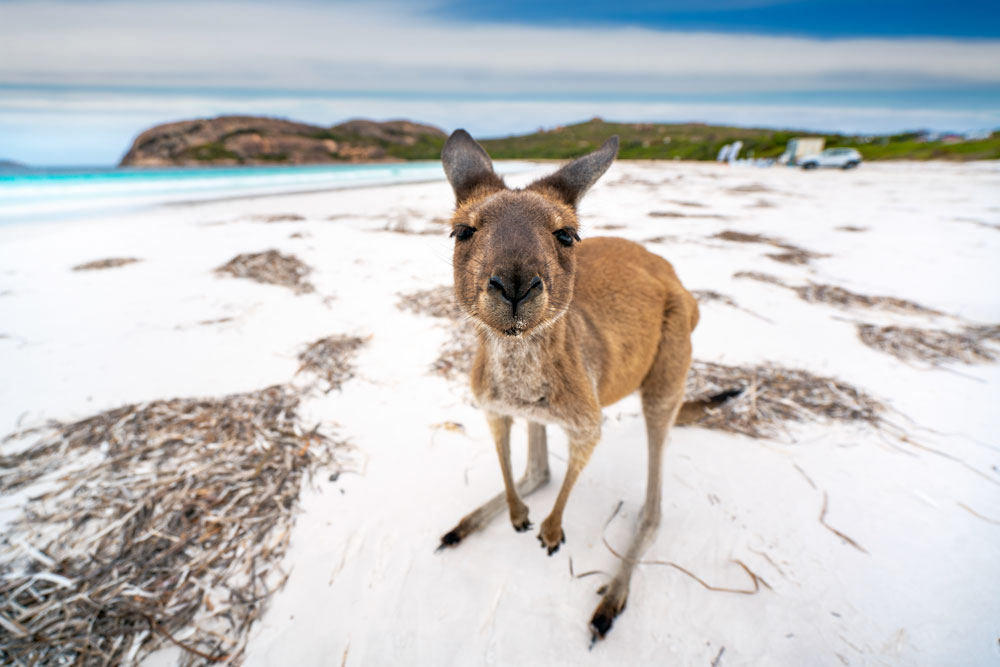 オーストラリア短期留学で楽しみたいこと