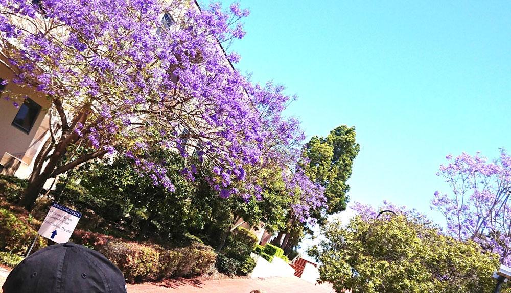 オーストラリア語学留学での学校選び