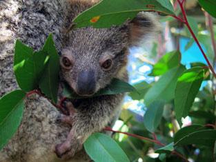 自然豊富なオーストラリア