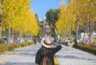 韓国で語学留学!民間の語学学校と大学付属の語学学校の違いは?